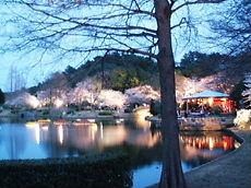 Sakura200802