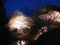 Sakura200803